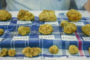 Truffes blanches d'Alba